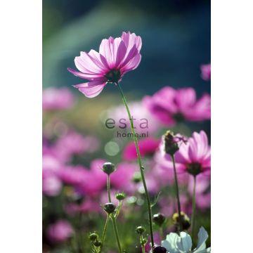 Fototapete Feldblumen Rosa