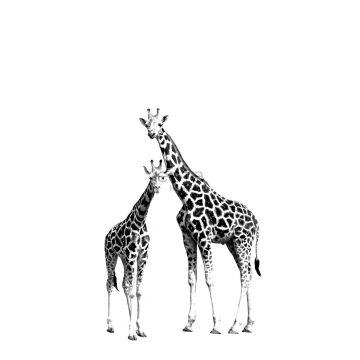 Fototapete Giraffen Schwarz und Weiß