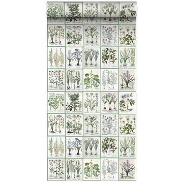 XXLVliestapete Seiten aus botanischen Büchern Hellgrau und Grün