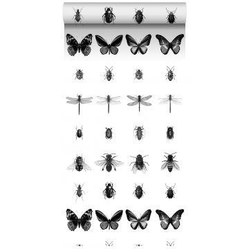 XXLVliestapete Zeichnungen von Insekten Schwarz-Weiß