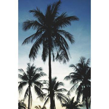 Fototapete Palmen Blau, Schwarz und Beige