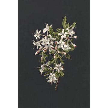 Fototapete Blüte Hellrosa und Schwarz