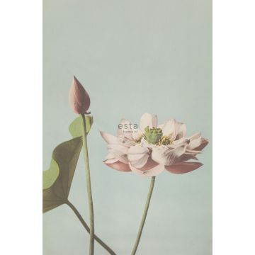 Fototapete Lotusblume Altrosa