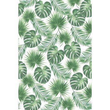 Fototapete tropische Blätter Grün