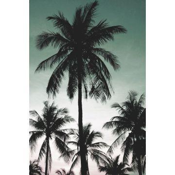 Fototapete Palmen Petrolgrün
