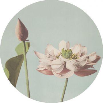 selbsklebende runde Tapete Lotusblume Hellrosa und Graublau