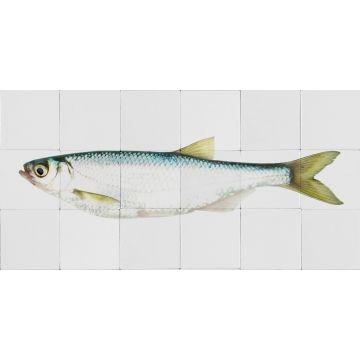 selbsklebende Wandtattoo Fisch Gelb und Blau