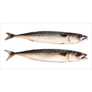 selbsklebende Wandtattoo Fische Grau